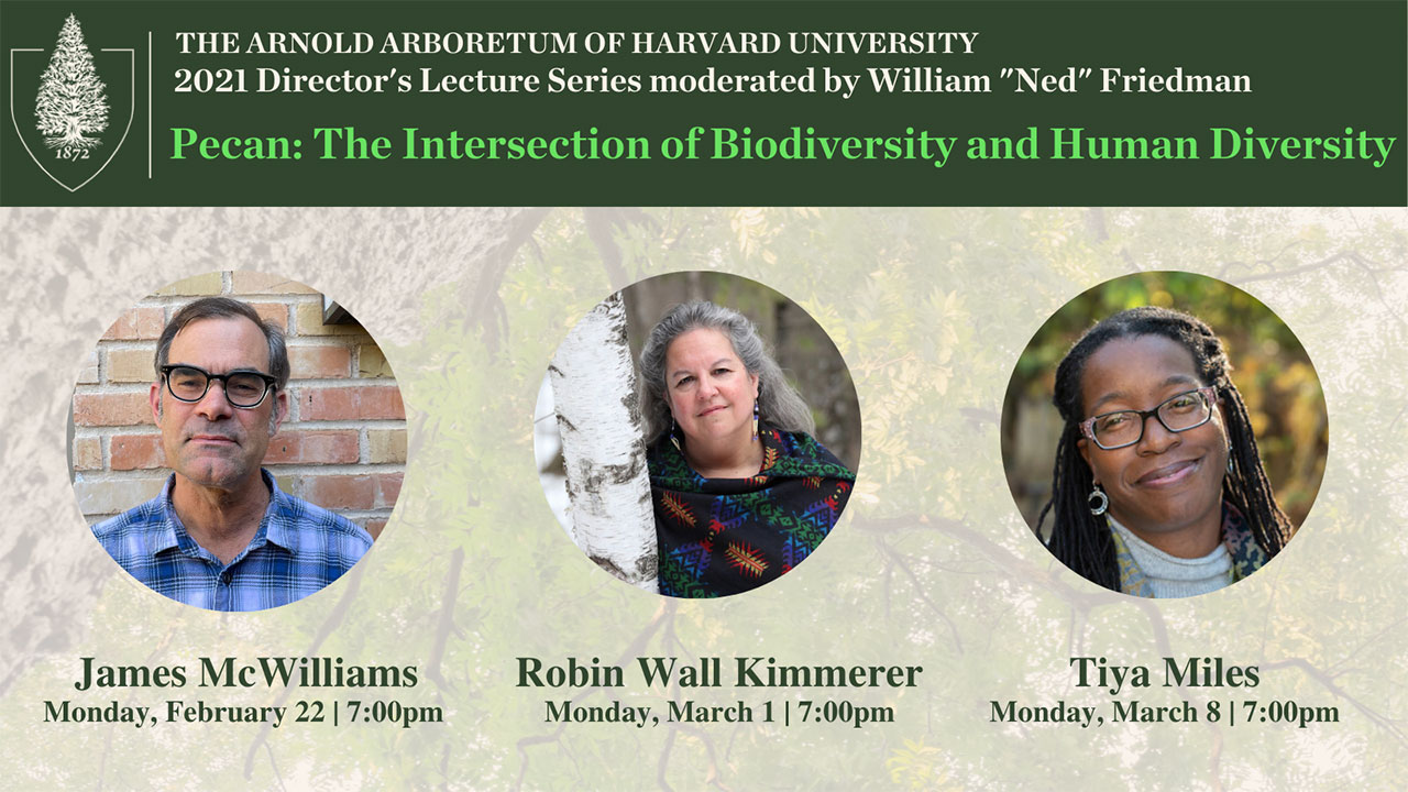 Header graphic for Arnold Arboretum Director's Lecture Series 2021, Pecan: The Intersection of Biodiversity and Human Diversity. Includes Arnold Arboretum logo and images of the three speakers, James McWilliams, Robin Wall Kimmerer, and Tiya Miles.